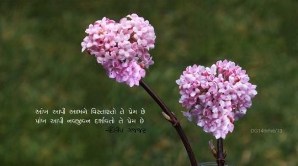 Dodilpinkflowers2